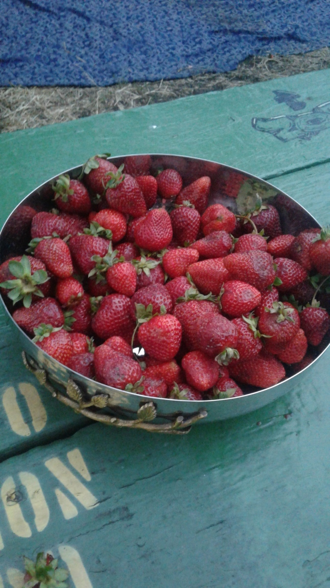The actors gave us strawberries! Photo by Me.